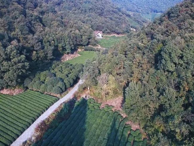 Yêu thích cuộc sống lãng mạn, cặp vợ chồng trẻ tạo không gian xanh mát giữa đồi núi mênh mông - Ảnh 3.