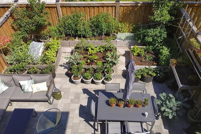 Căng thẳng với công việc, chàng trai trẻ làm vườn để thư giãn mỗi khi về nhà - Ảnh 1.
