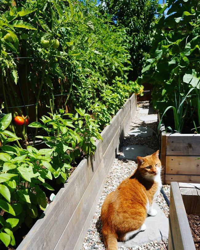 Căng thẳng với công việc, chàng trai trẻ làm vườn để thư giãn mỗi khi về nhà - Ảnh 3.