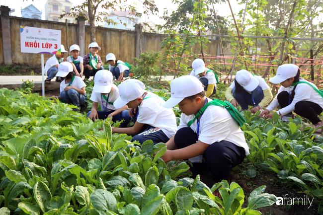 Vườn rau xanh ngát đủ loại cây trong các trường, cha mẹ nhìn vào cũng phải mê tít - Ảnh 1.