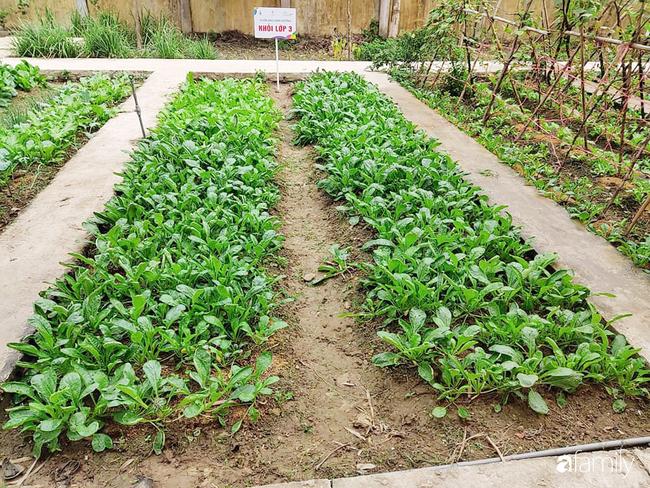 Vườn rau xanh ngát đủ loại cây trong các trường, cha mẹ nhìn vào cũng phải mê tít - Ảnh 3.
