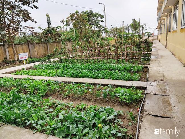 Vườn rau xanh ngát đủ loại cây trong các trường, cha mẹ nhìn vào cũng phải mê tít - Ảnh 4.