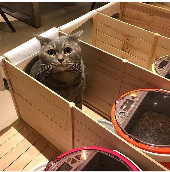 Mèo bố béo phì tranh ăn hết phần con, ông bà chủ liền nghĩ ra cách cực hay giúp nó giảm cân - Ảnh 6.