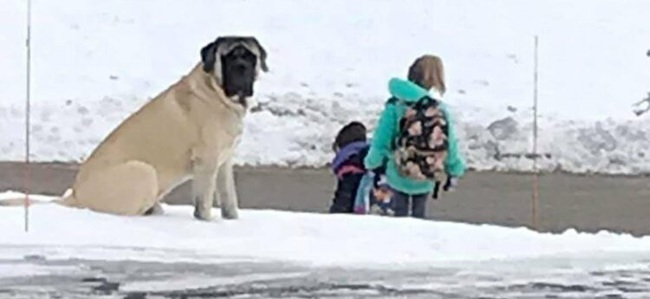 Chú chó ngoan nhất năm: Sáng nào cũng đợi cô chủ nhỏ lên xe bus an toàn rồi mới vào nhà  - Ảnh 3.