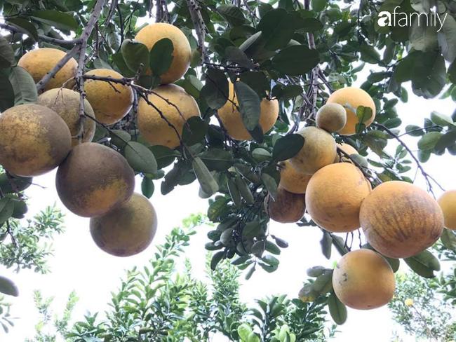 6 mách nước giúp bà nội trợ Việt chọn bưởi Diễn ăn Tết 10 quả thơm ngọt như 10 - Ảnh 4.
