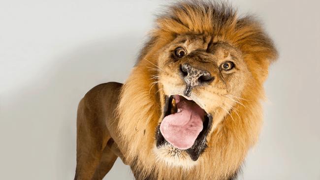 """Câu chuyện """"sư tử sợ chó dại"""" và bài học đối phó với kẻ tiểu nhân cho loạt dân công sở - Ảnh 3."""