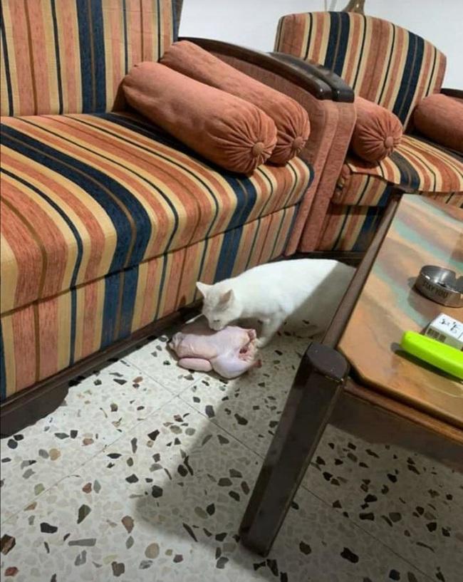 """Boss Mèo và những khoảnh khắc trở thành """"mẹ thiên hạ"""" trong nhà nhưng không một """"con sen"""" nào dám phàn nàn - Ảnh 1."""