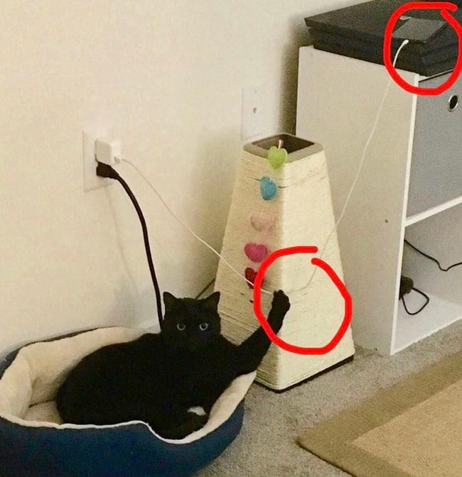 """Boss Mèo và những khoảnh khắc trở thành """"mẹ thiên hạ"""" trong nhà nhưng không một """"con sen"""" nào dám phàn nàn - Ảnh 2."""