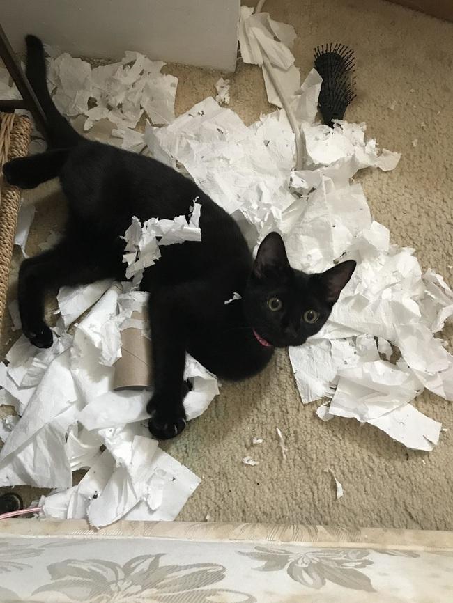 """Boss Mèo và những khoảnh khắc trở thành """"mẹ thiên hạ"""" trong nhà nhưng không một """"con sen"""" nào dám phàn nàn - Ảnh 4."""