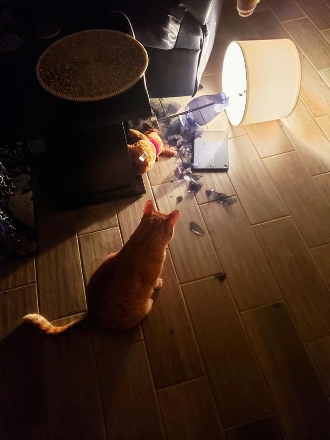 """Boss Mèo và những khoảnh khắc trở thành """"mẹ thiên hạ"""" trong nhà nhưng không một """"con sen"""" nào dám phàn nàn - Ảnh 6."""