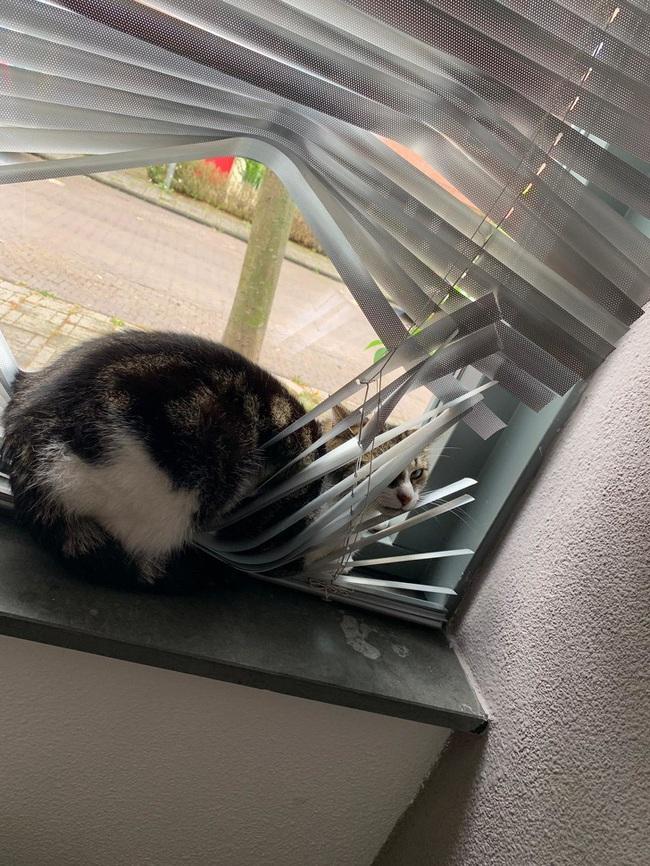 """Boss Mèo và những khoảnh khắc trở thành """"mẹ thiên hạ"""" trong nhà nhưng không một """"con sen"""" nào dám phàn nàn - Ảnh 7."""