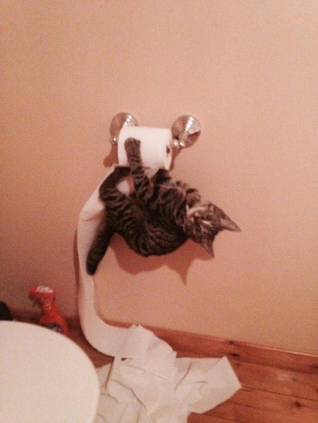 """Boss Mèo và những khoảnh khắc trở thành """"mẹ thiên hạ"""" trong nhà nhưng không một """"con sen"""" nào dám phàn nàn - Ảnh 9."""