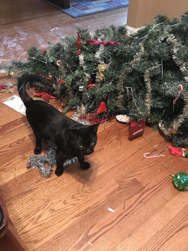 """Boss Mèo và những khoảnh khắc trở thành """"mẹ thiên hạ"""" trong nhà nhưng không một """"con sen"""" nào dám phàn nàn - Ảnh 11."""