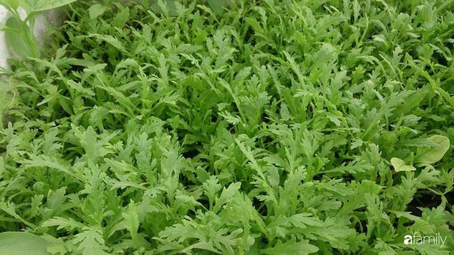 Sân thượng trồng đủ loại rau quả sạch như vườn dưới đất ở Vũng Tàu - Ảnh 19.