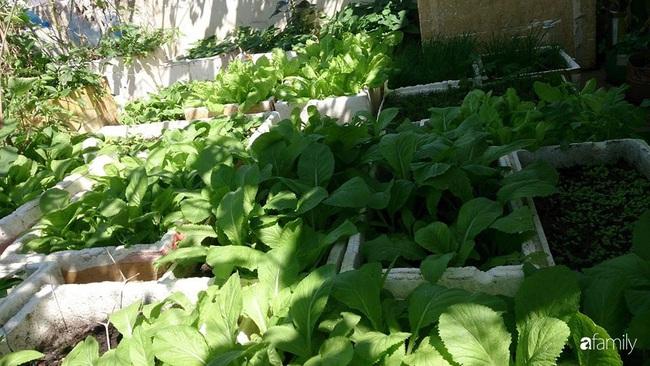 Sân thượng trồng đủ loại rau quả sạch như vườn dưới đất ở Vũng Tàu - Ảnh 2.