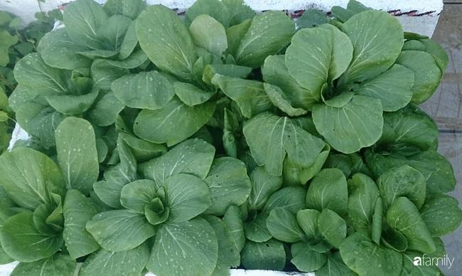 Sân thượng trồng đủ loại rau quả sạch như vườn dưới đất ở Vũng Tàu - Ảnh 10.