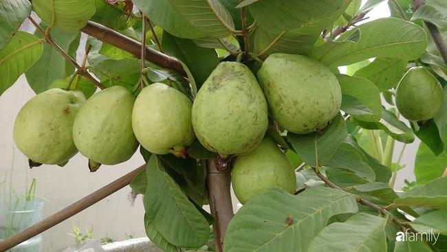 Sân thượng trồng đủ loại rau quả sạch như vườn dưới đất ở Vũng Tàu - Ảnh 7.