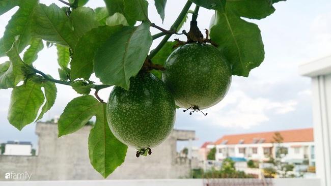 Sân thượng trồng đủ loại rau quả sạch như vườn dưới đất ở Vũng Tàu - Ảnh 6.