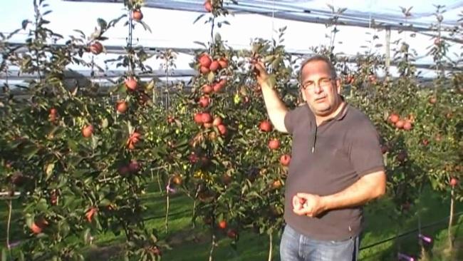 Chị em phấn khích với giống táo vỏ đỏ, ruột cũng đỏ mà lại không phải là quả biến đổi gen - Ảnh 3.