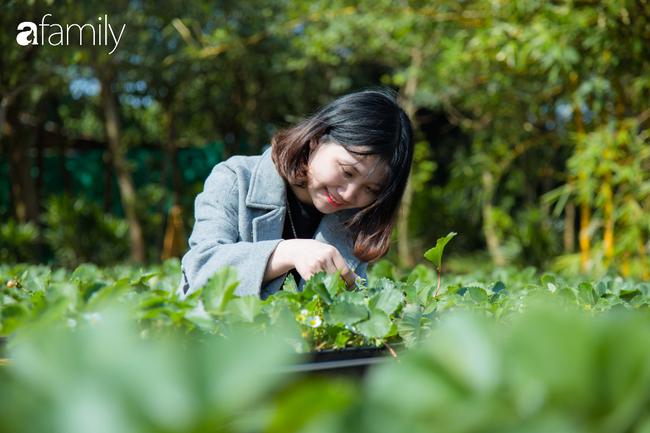 Cuối tuần ở Hà Nội chưa biết đi đâu chơi, bố mẹ đừng ngại chở các bé tới ngay vườn dâu xinh mới mở để thỏa thích khám phá - Ảnh 5.