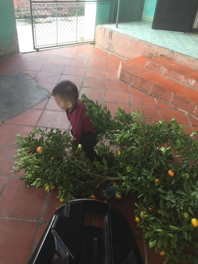 Chuyện bi hài ngày Tết của gia đình có con nhỏ: Bố mẹ hào hứng mua cây quất chơi Tết, con ra sức hái sạch - Ảnh 2.