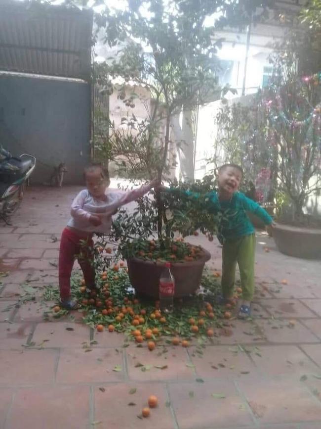 Chuyện bi hài ngày Tết của gia đình có con nhỏ: Bố mẹ hào hứng mua cây quất chơi Tết, con ra sức hái sạch - Ảnh 1.