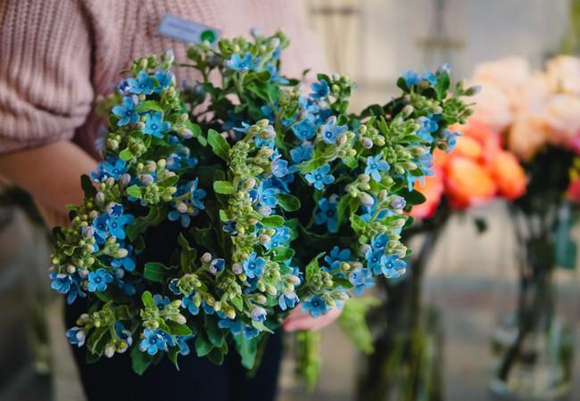 """Ngắm những loài hoa nhập khẩu đẹp lạ """"sang chảnh"""" để hiểu tại sao các đại gia Hà thành sẵn sàng chi 50 triệu sắm hoa đẹp chơi Tết - Ảnh 25."""