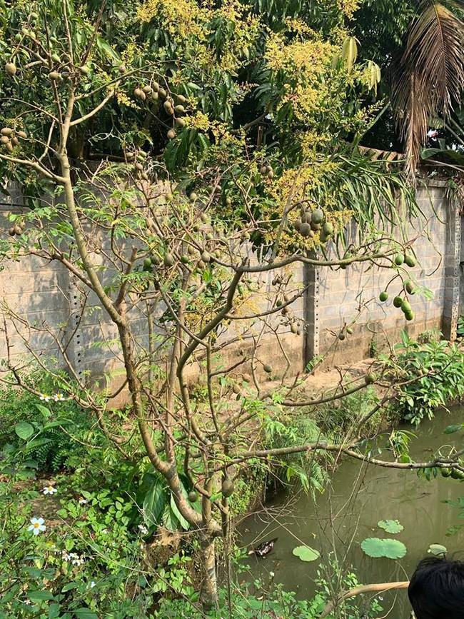 Ngôi nhà ở ngoại ô xanh mát như một công viên thu nhỏ của vợ chồng diễn viên Hồng Đăng - Ảnh 14.