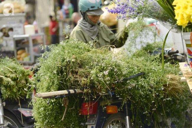 Ngày cuối năm tắm lá mùi già, nét truyền thống đẹp đậm vị Tết của miền Bắc - Ảnh 1.
