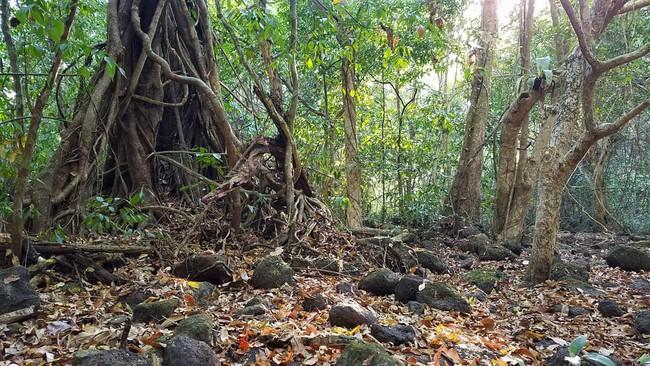 Kỳ nghỉ lễ sắp tới, hãy thử đưa con đến rừng Nam Cát Tiên chơi cùng cá sấu và 4 trải nghiệm lý thú sau - Ảnh 1.