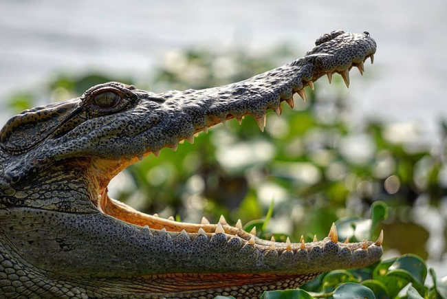 Kỳ nghỉ lễ sắp tới, hãy thử đưa con đến rừng Nam Cát Tiên chơi cùng cá sấu và 4 trải nghiệm lý thú sau - Ảnh 10.