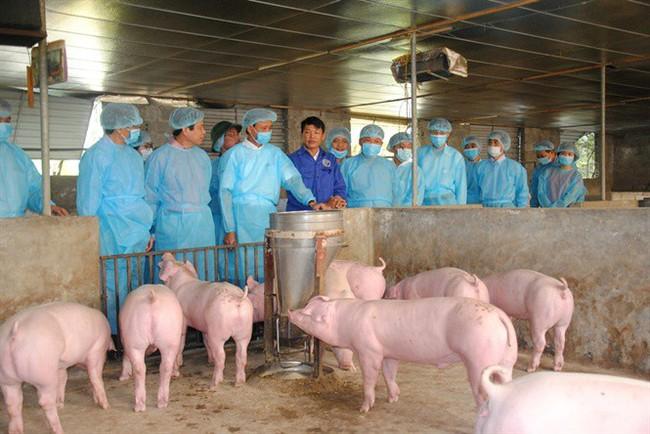 Thịt lợn nhiễm dịch tả châu Phi, người dân có nên tạm tẩy chay thịt lợn? - Ảnh 1.