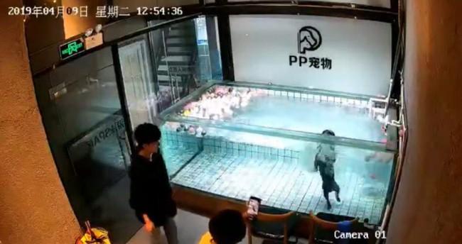 Thả chó cưng vào bể bơi rồi mải mê cầm điện thoại quay video đăng lên mạng sống ảo, cô gái nhận cái kết đắng hối hận cũng đã muộn màng - Ảnh 1.