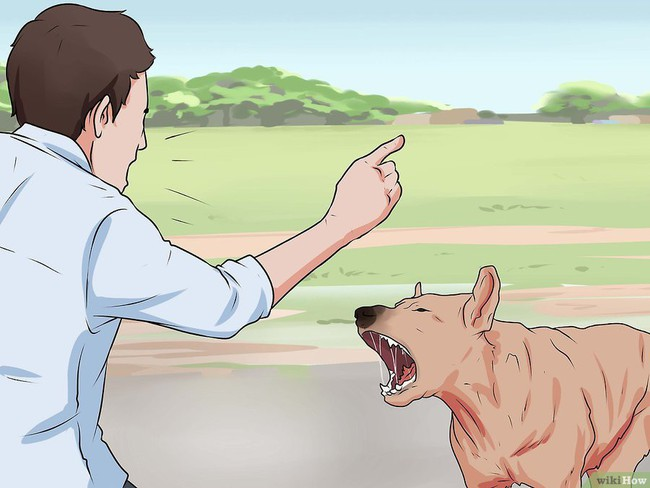 Khi bị chó tấn công, làm ngay những việc này để cứu mạng bản thân - Ảnh 5.