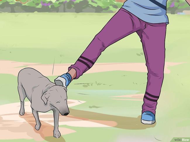 Khi bị chó tấn công, làm ngay những việc này để cứu mạng bản thân - Ảnh 6.