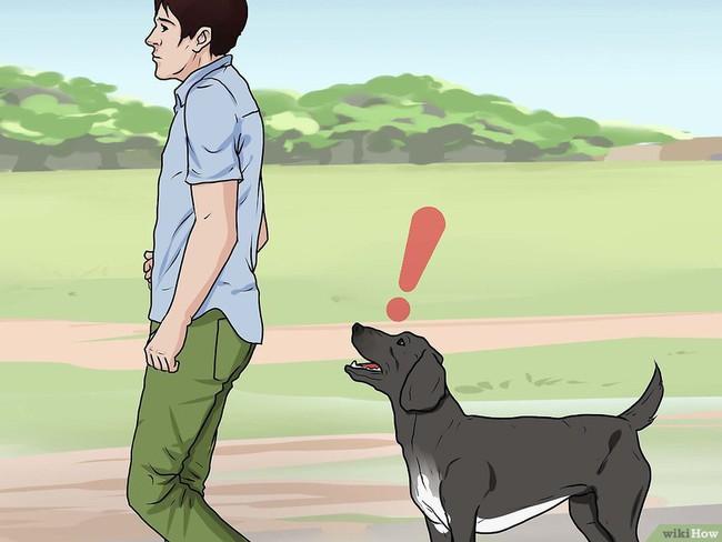 Khi bị chó tấn công, làm ngay những việc này để cứu mạng bản thân - Ảnh 9.