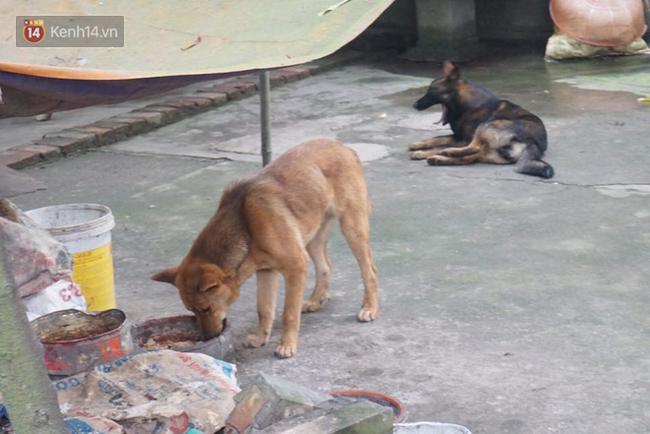Chủ đàn chó cắn bé trai 7 tuổi tử vong lao ra khỏi nhà uy hiếp, chửi bới phóng viên - Ảnh 3.