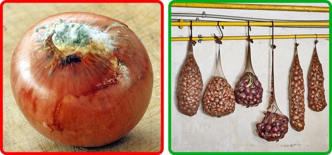 Thật không thể tin nổi chẳng cần tủ lạnh vẫn có thể giữ rau củ quả tươi roi rói nhờ loạt bí kíp đặc biệt  - Ảnh 2.