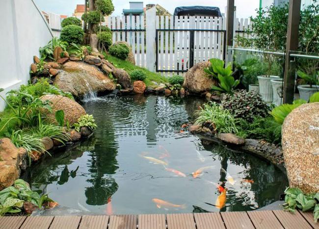 Thiết kế hồ cá tăng cảm giác gần gũi thiên nhiên cho nhà phố - Ảnh 15.