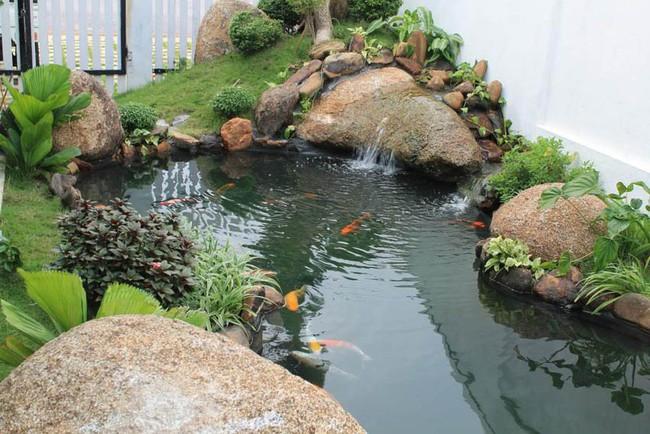 Thiết kế hồ cá tăng cảm giác gần gũi thiên nhiên cho nhà phố - Ảnh 12.