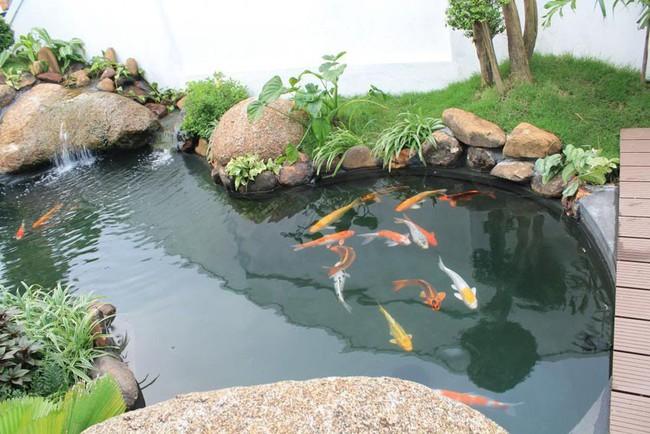 Thiết kế hồ cá tăng cảm giác gần gũi thiên nhiên cho nhà phố - Ảnh 11.