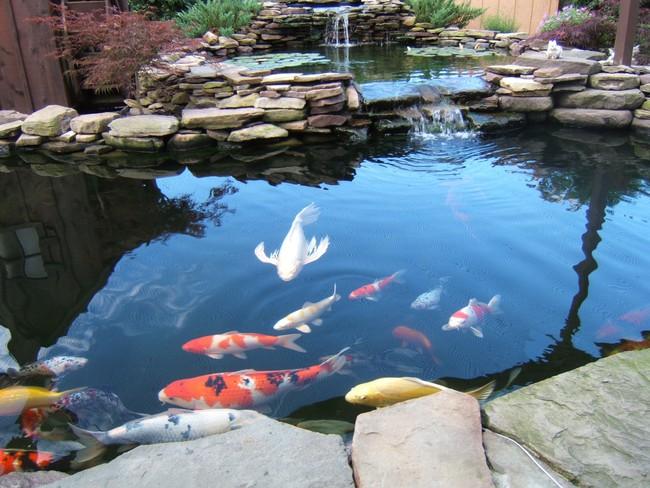Thiết kế hồ cá tăng cảm giác gần gũi thiên nhiên cho nhà phố - Ảnh 10.