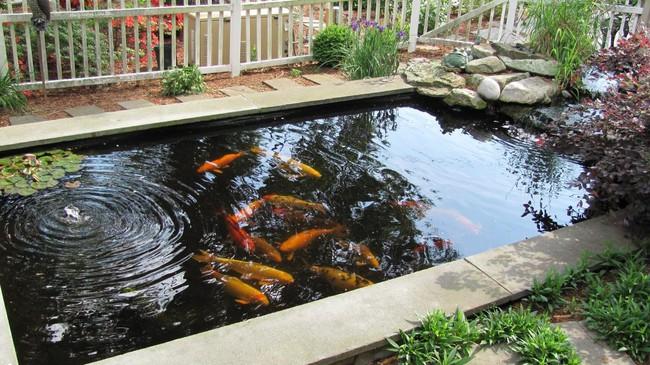 Thiết kế hồ cá tăng cảm giác gần gũi thiên nhiên cho nhà phố - Ảnh 9.
