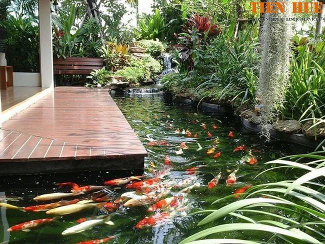 Thiết kế hồ cá tăng cảm giác gần gũi thiên nhiên cho nhà phố - Ảnh 6.