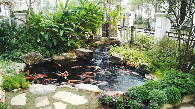 Thiết kế hồ cá tăng cảm giác gần gũi thiên nhiên cho nhà phố - Ảnh 1.