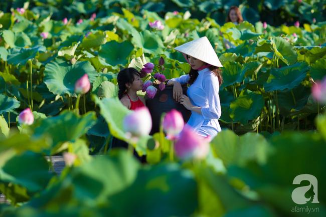 Một mùa sen nữa lại về, Hà Nội lại nhuộm hồng cánh hoa, tươi như thanh xuân của gái chưa chồng - Ảnh 7.
