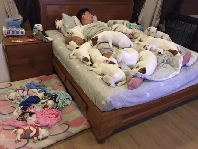 Anh chồng kêu khổ vì vợ cứ nằng nặc đòi nuôi 2 con chó, 3 năm sau kết cục xảy đến với anh khiến ai nấy câm nín - Ảnh 1.
