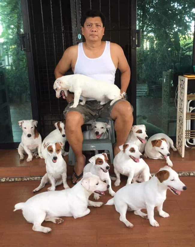 Anh chồng kêu khổ vì vợ cứ nằng nặc đòi nuôi 2 con chó, 3 năm sau kết cục xảy đến với anh khiến ai nấy câm nín - Ảnh 4.
