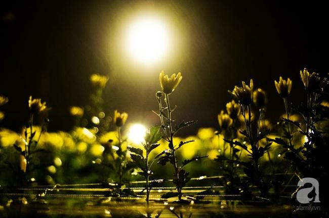 Đi ngắm hoa vào ban ngày xưa rồi, giờ đây mọi người còn đi xem hoa vào buổi tối cơ - Ảnh 4.