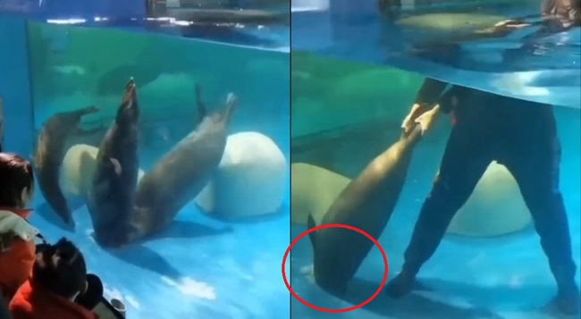 Táy máy mở nắp cống thoát nước, hải cẩu bị hút xuống rồi tử vong thương tâm trước mặt du khách - Ảnh 2.